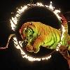 Цирки в Щучьем