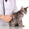 Ветеринарные клиники в Щучьем